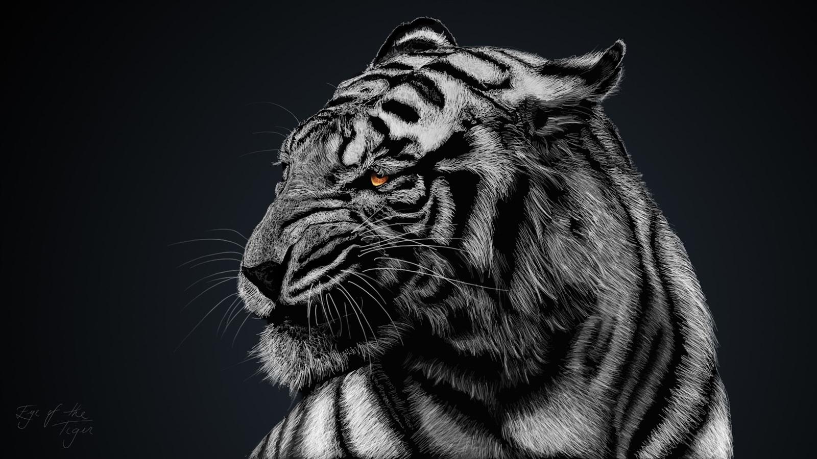 Fondos De Pantalla Tigre Blanco, Fondo Negro 1920x1080