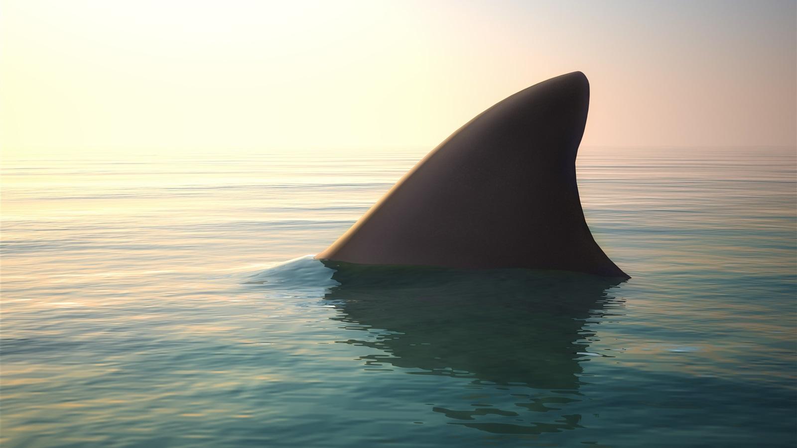 Wallpaper Shark, fin, water, ocean 2560x1600 HD Picture, Image