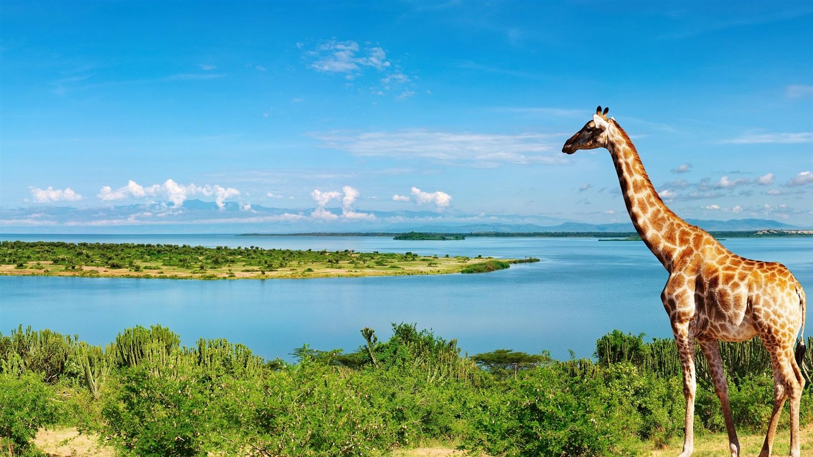 Giraffe am Nil Seite Afrika 1920x1080 Full