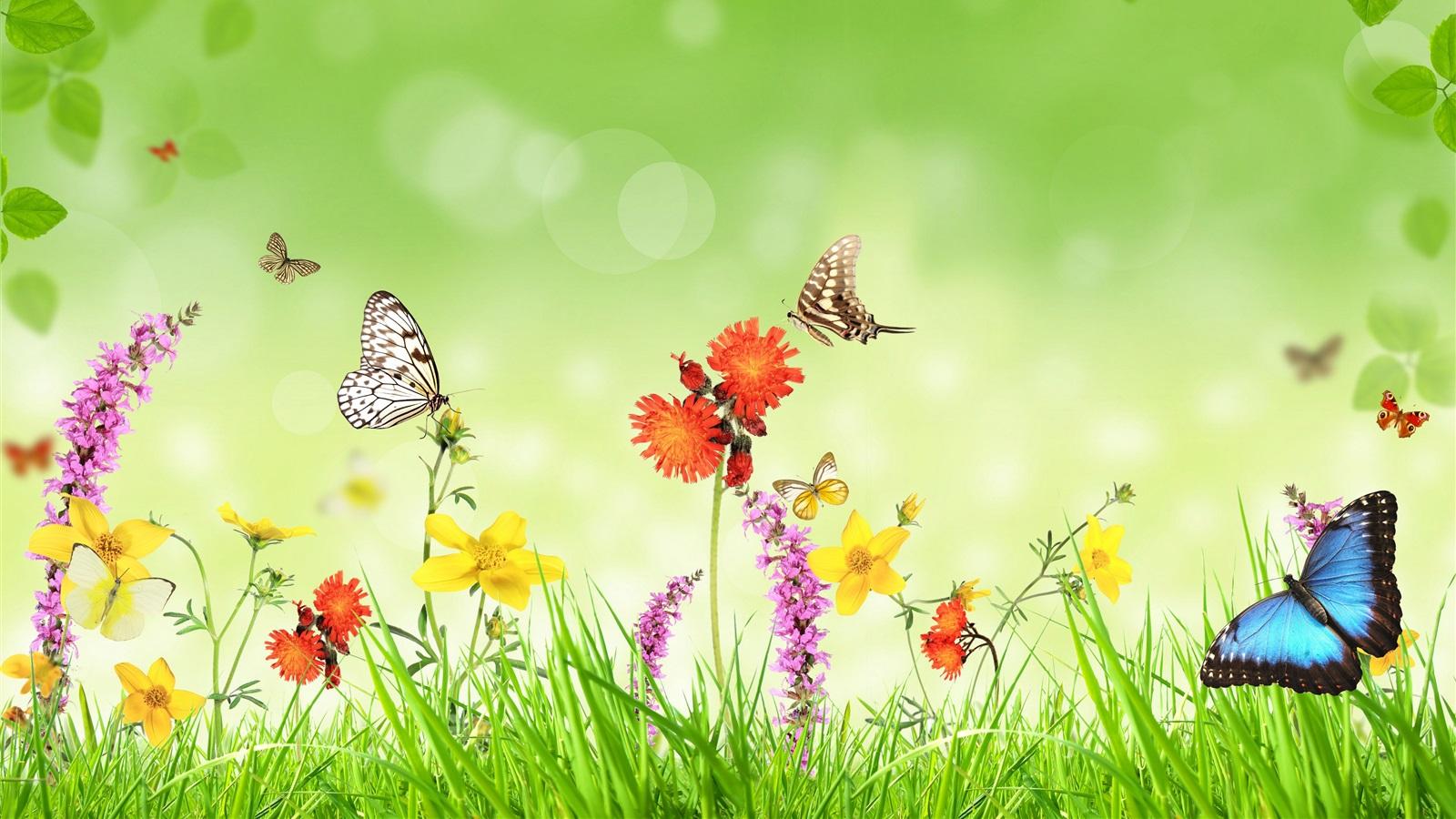 春天,鲜花,草,蝴蝶,绿色背景,创意设计 壁纸图片
