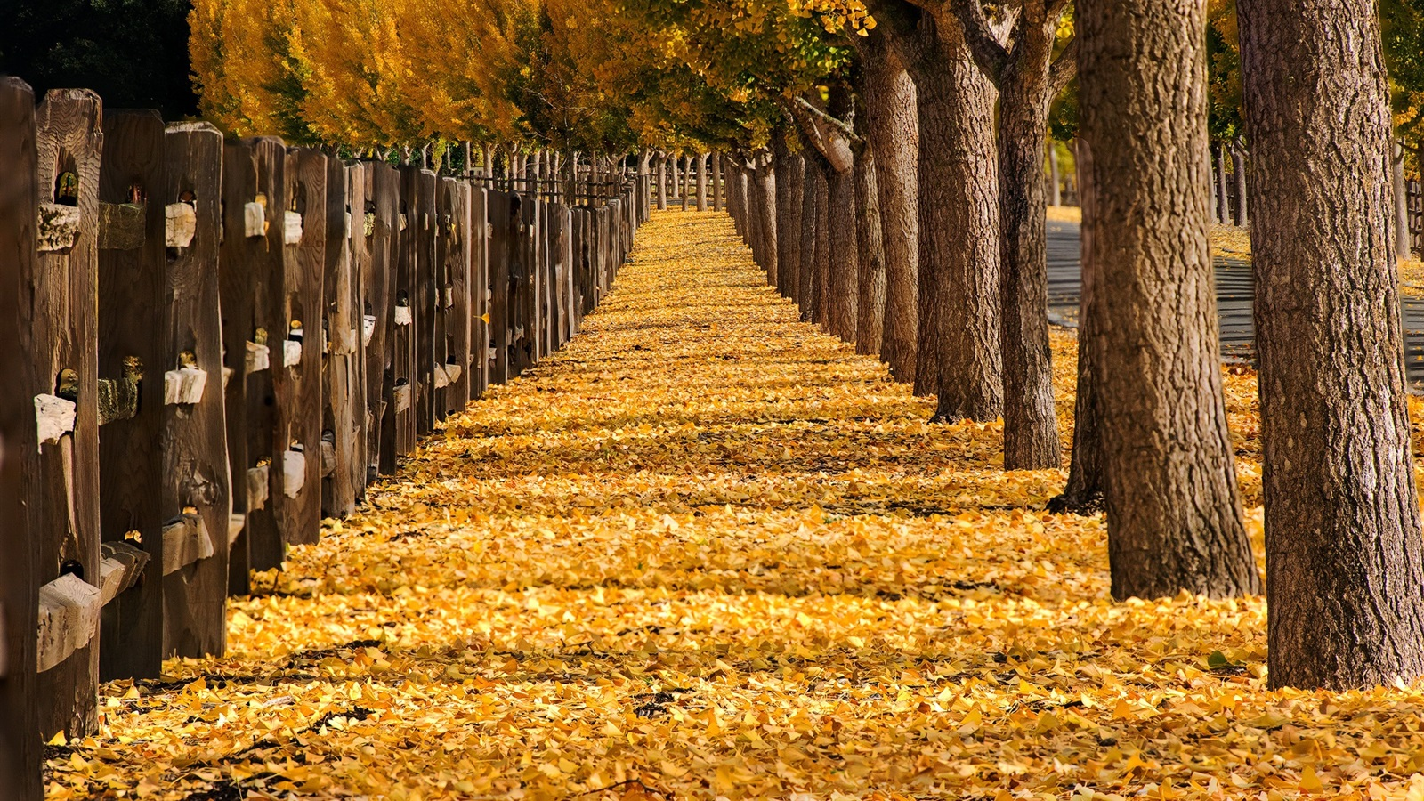 Wallpaper Trees Yellow Leaves Path Fence Park Autumn