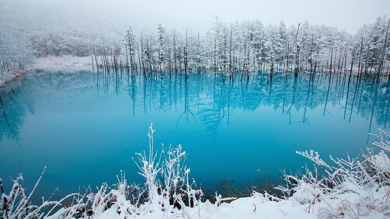 壁纸日本 北海道 蓝塘 树木 雪 冬天1920x1080 Full Hd 2k 高清