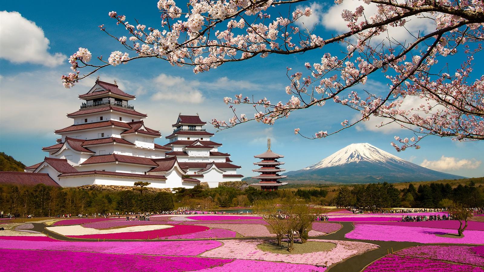 壁紙 富士山 日本 寺院 さくらの花 19x1440 Hd 無料のデスクトップの背景 画像