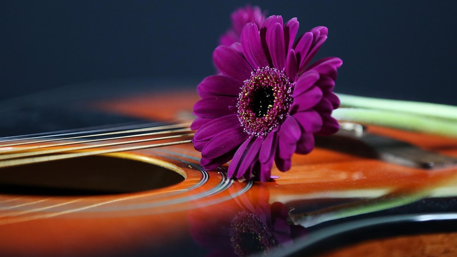 Wallpaper Purple daisy, guitar 1920x1200 HD Picture, Image