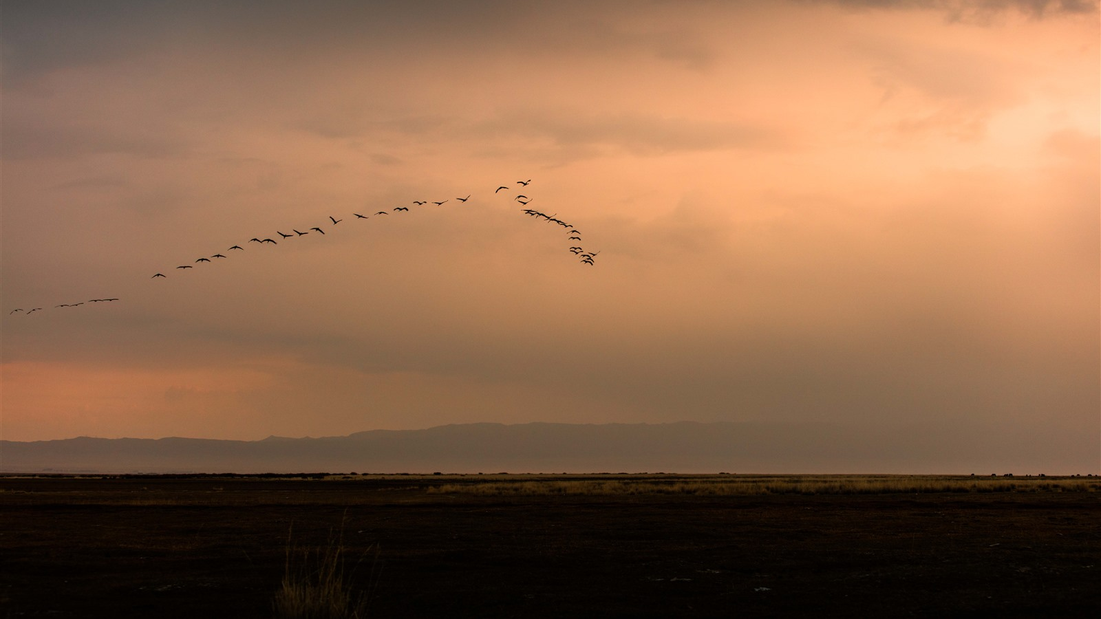 Wallpaper A Group Of Birds Flight In The Sky Sunset 7680x4320 Uhd 8k Picture Image