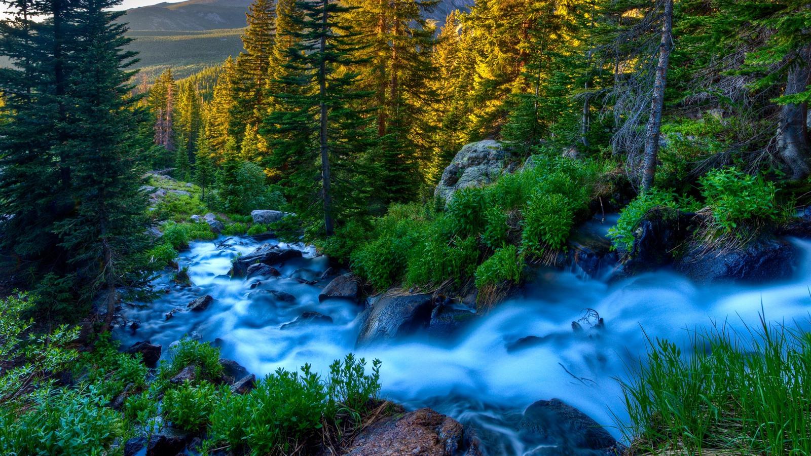 Wallpaper Beautiful Nature Stream Trees 2560x1600 Hd