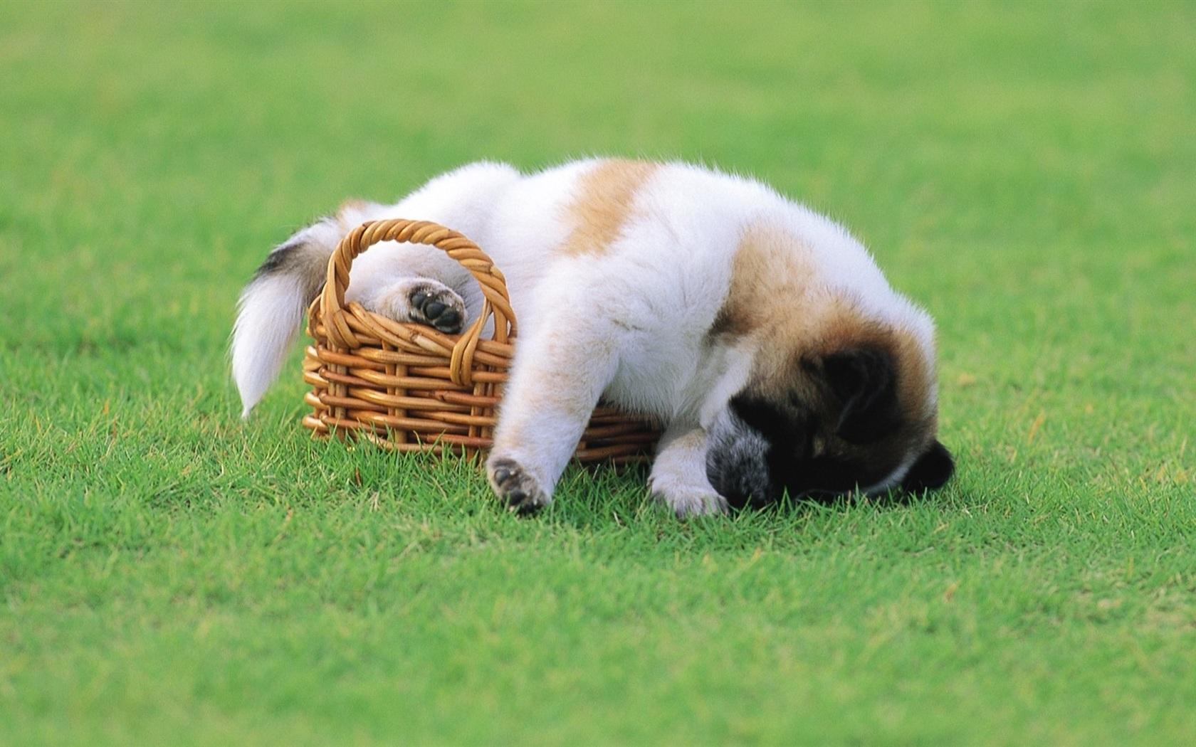 子犬の画像 p1_35