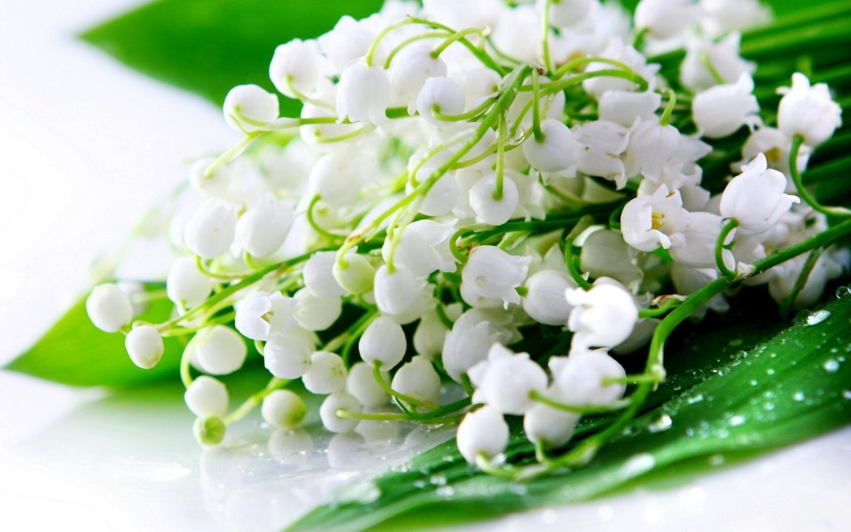 Fonds d 39 cran bouquet de fleurs lys du printemps 1680x1050 for Bouquet de fleurs hd