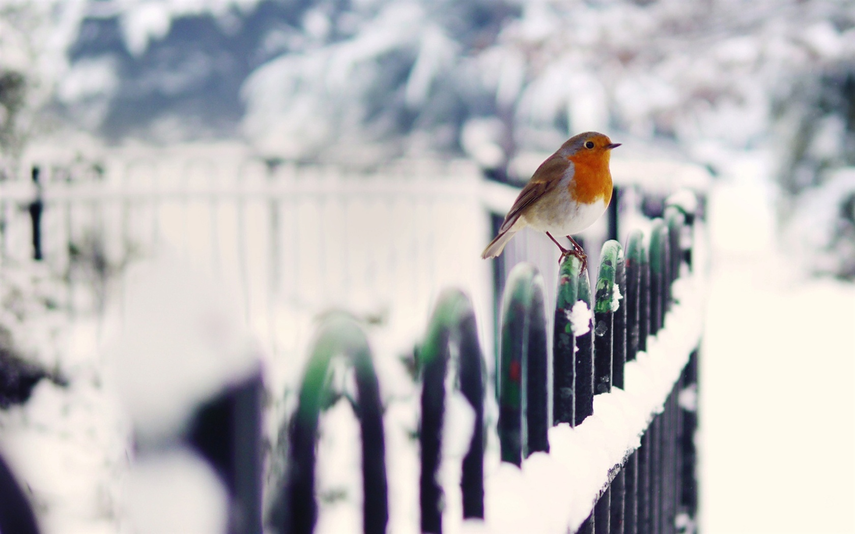 Download Wallpaper 1680x1050 Winter bird snow fence HD ...