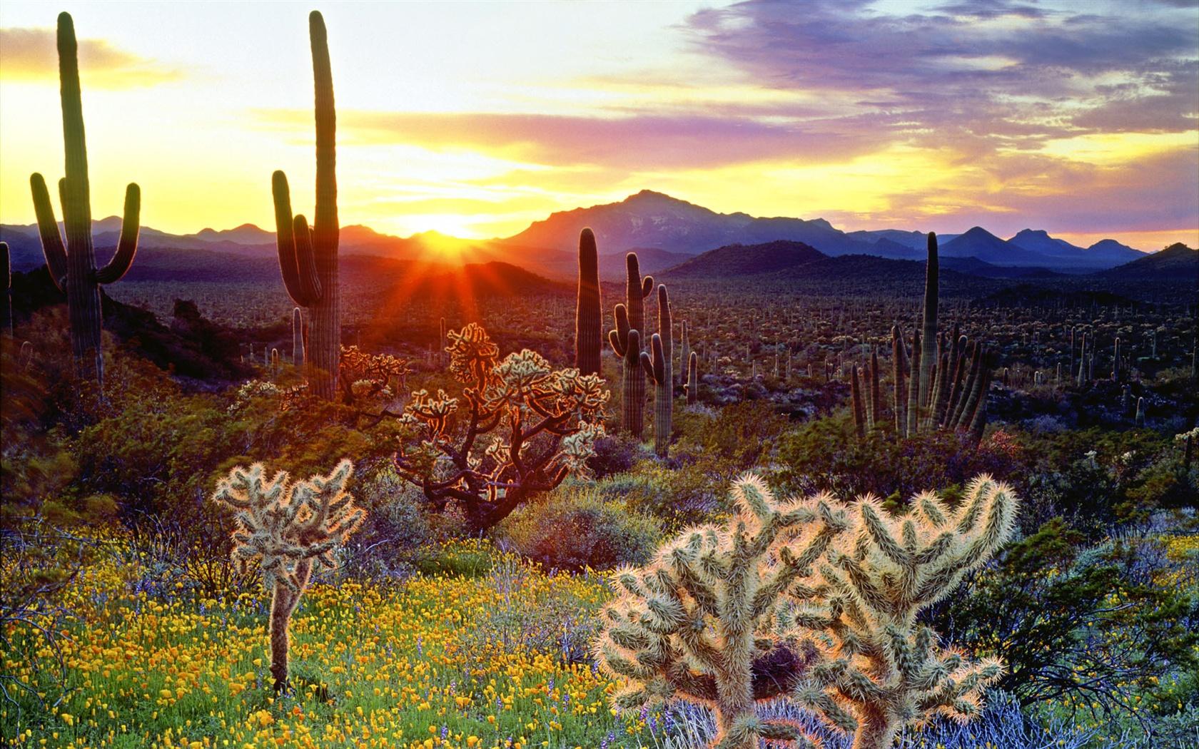 アメリカの風景は、山にはサボテンで覆われている ... アメリカの風景は、山にはサボテンで覆われ