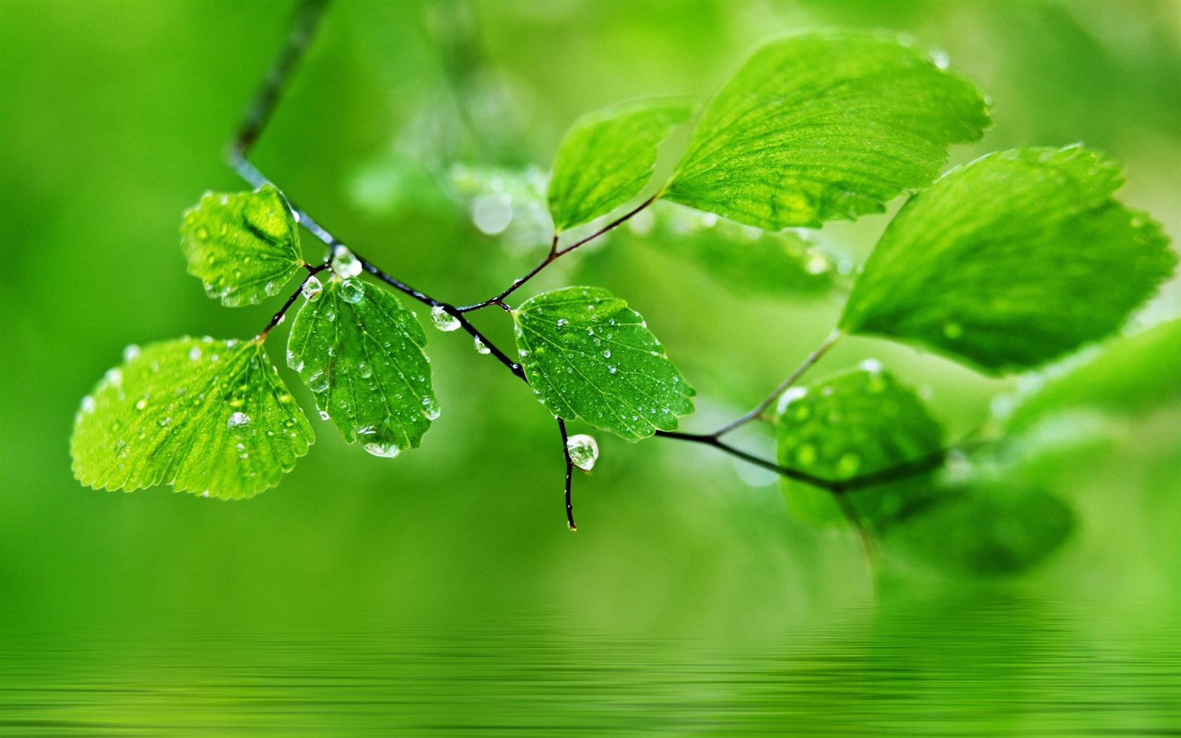 すべての折り紙 折り紙 カエル リアル : Natural Green Leaves Wallpaper
