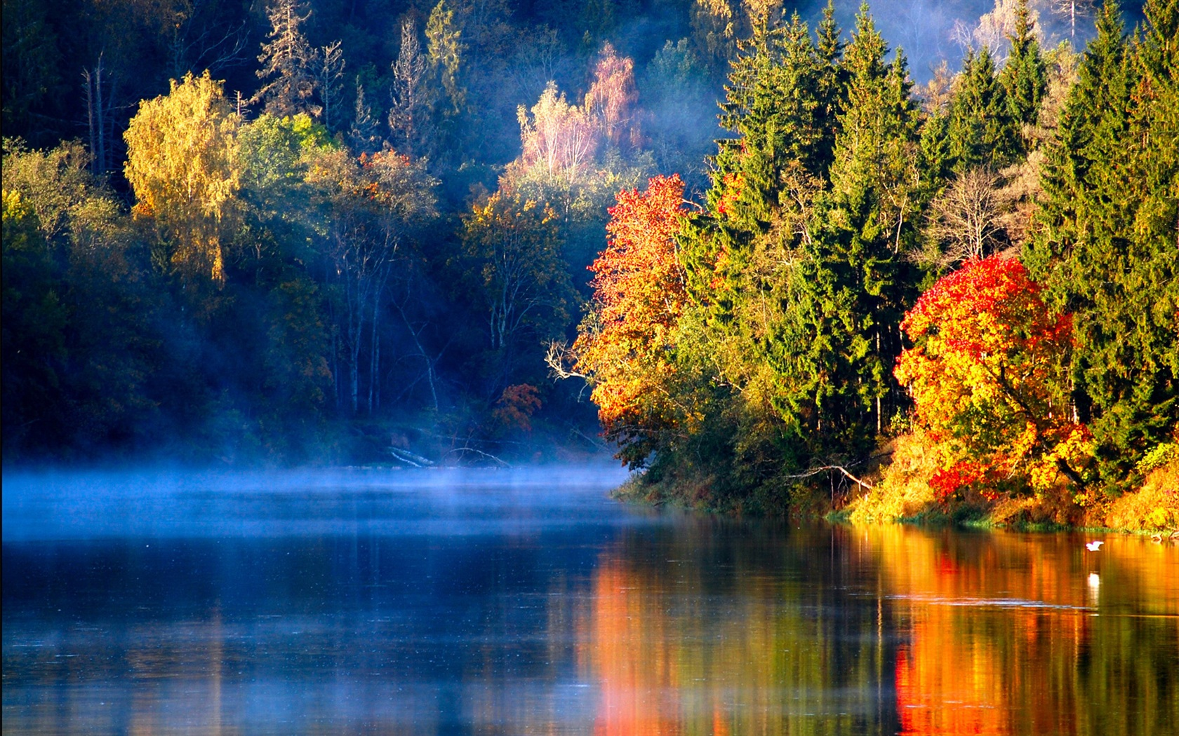 Wallpaper Latvian autumn forest river mist in the morning ...