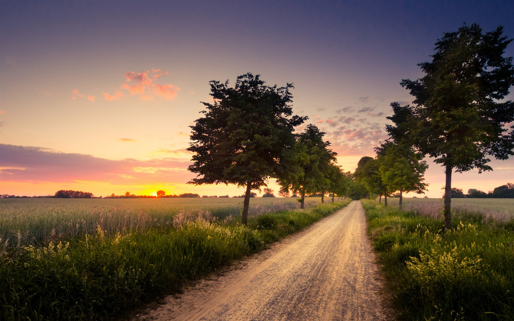 wallpaper tree field road landscape at sunset 1920x1200 hd