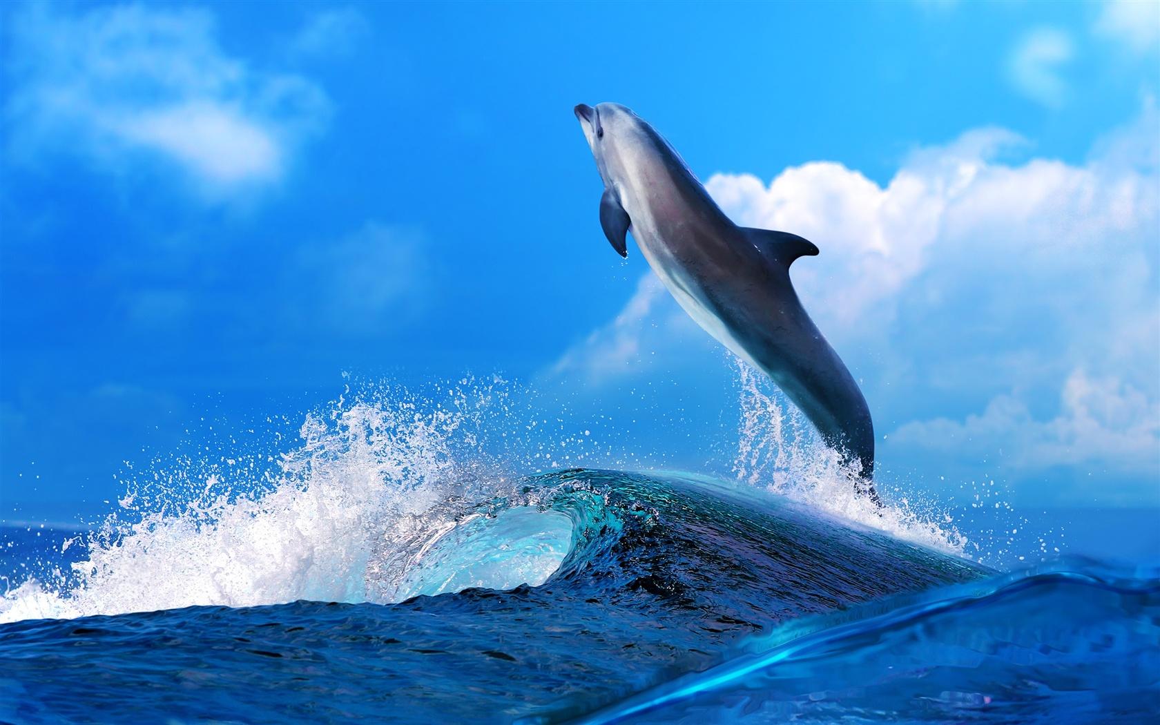 イルカの画像 p1_37