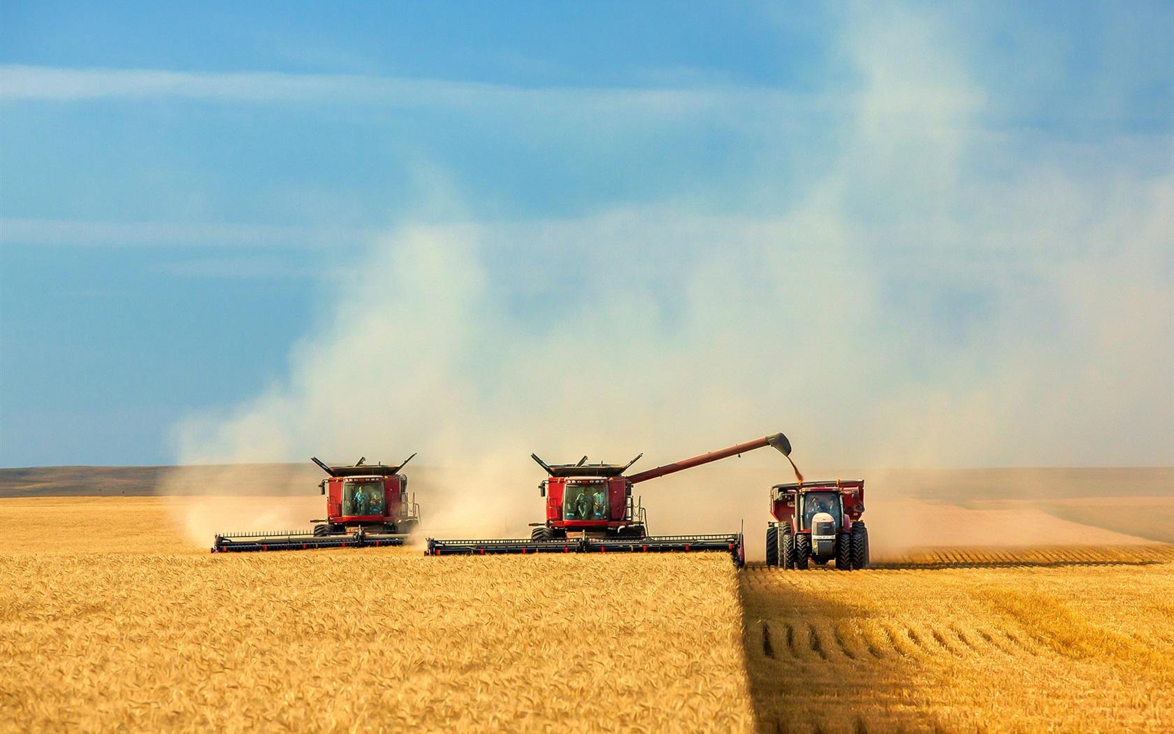 Яровая пшеница  ruf2ru