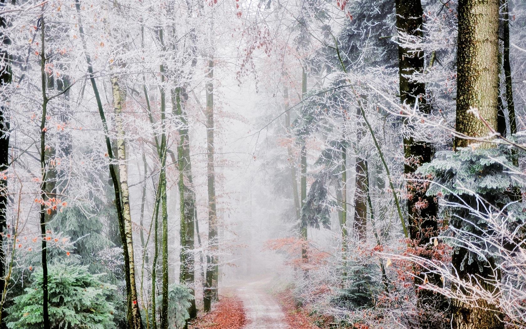 wallpaper fog forest