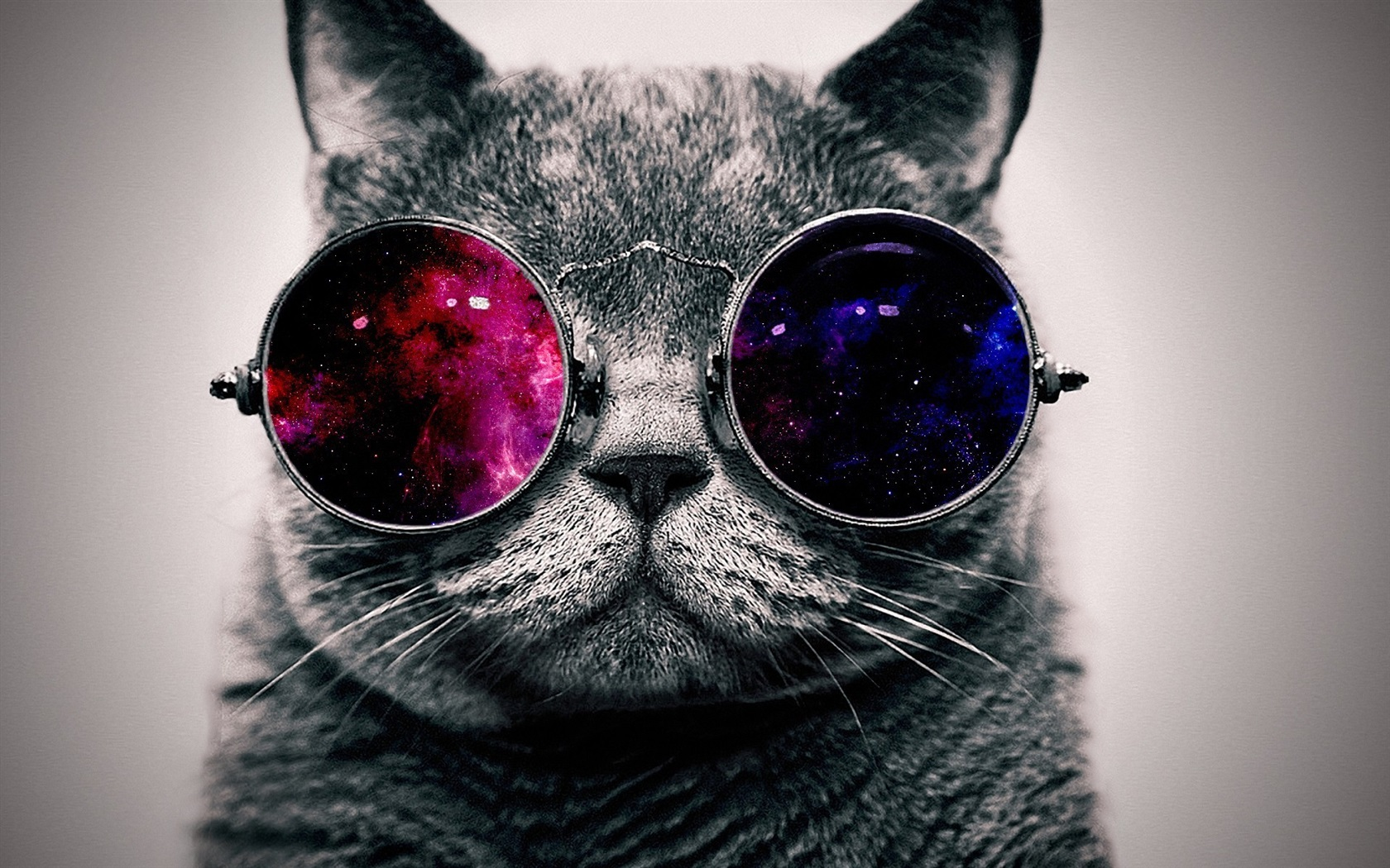 Cute cat with sunglass, very cool Wallpaper | 1680x1050 ...