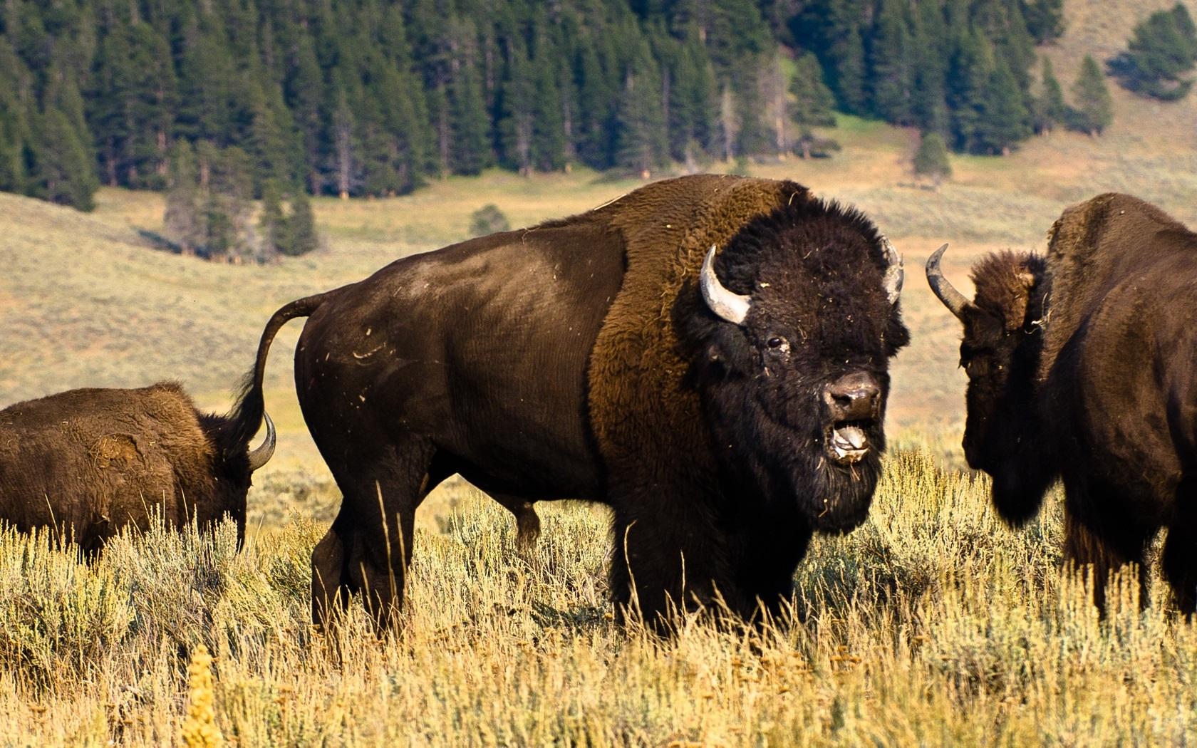 Картинки животных сев америки замене задних