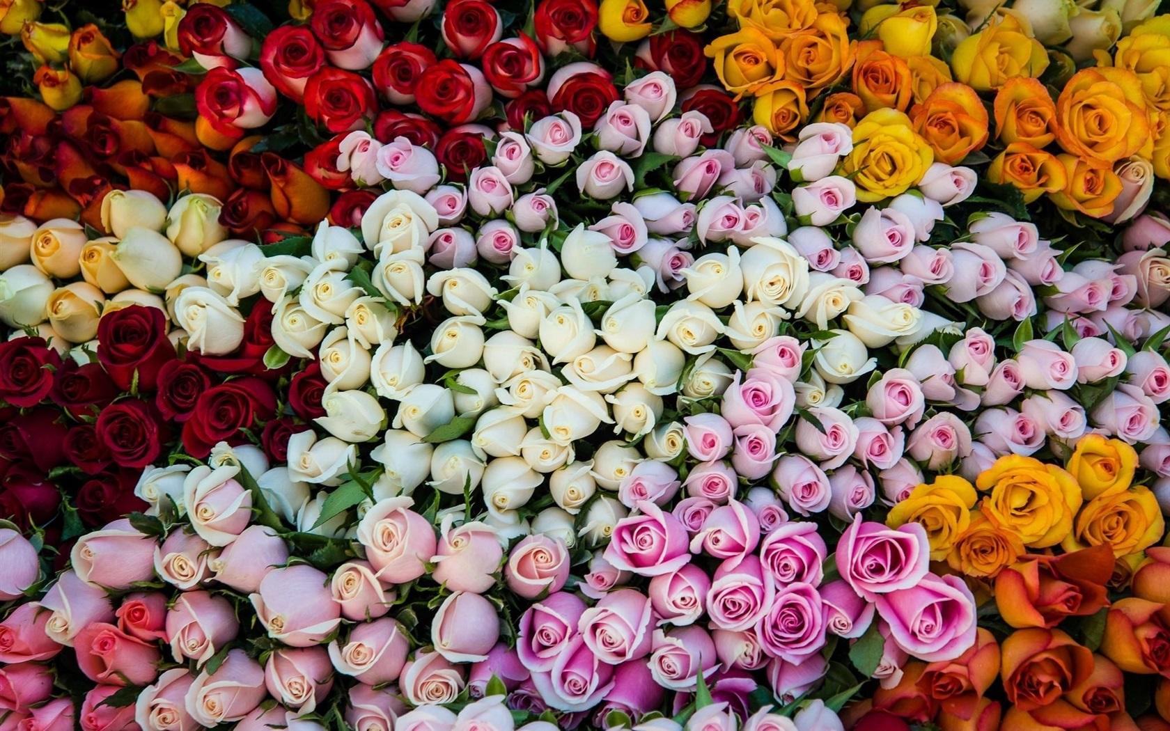 Картинки разные цветов роз