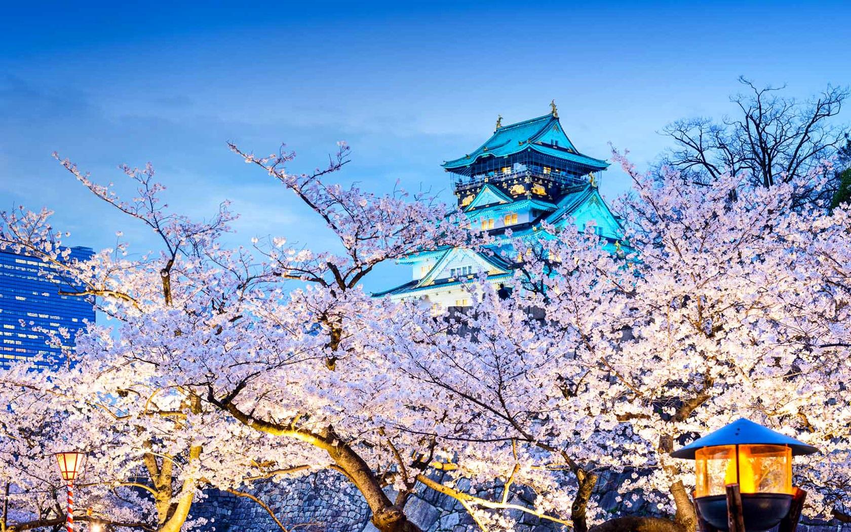 Замок Осака Япония сакура  № 3700682  скачать