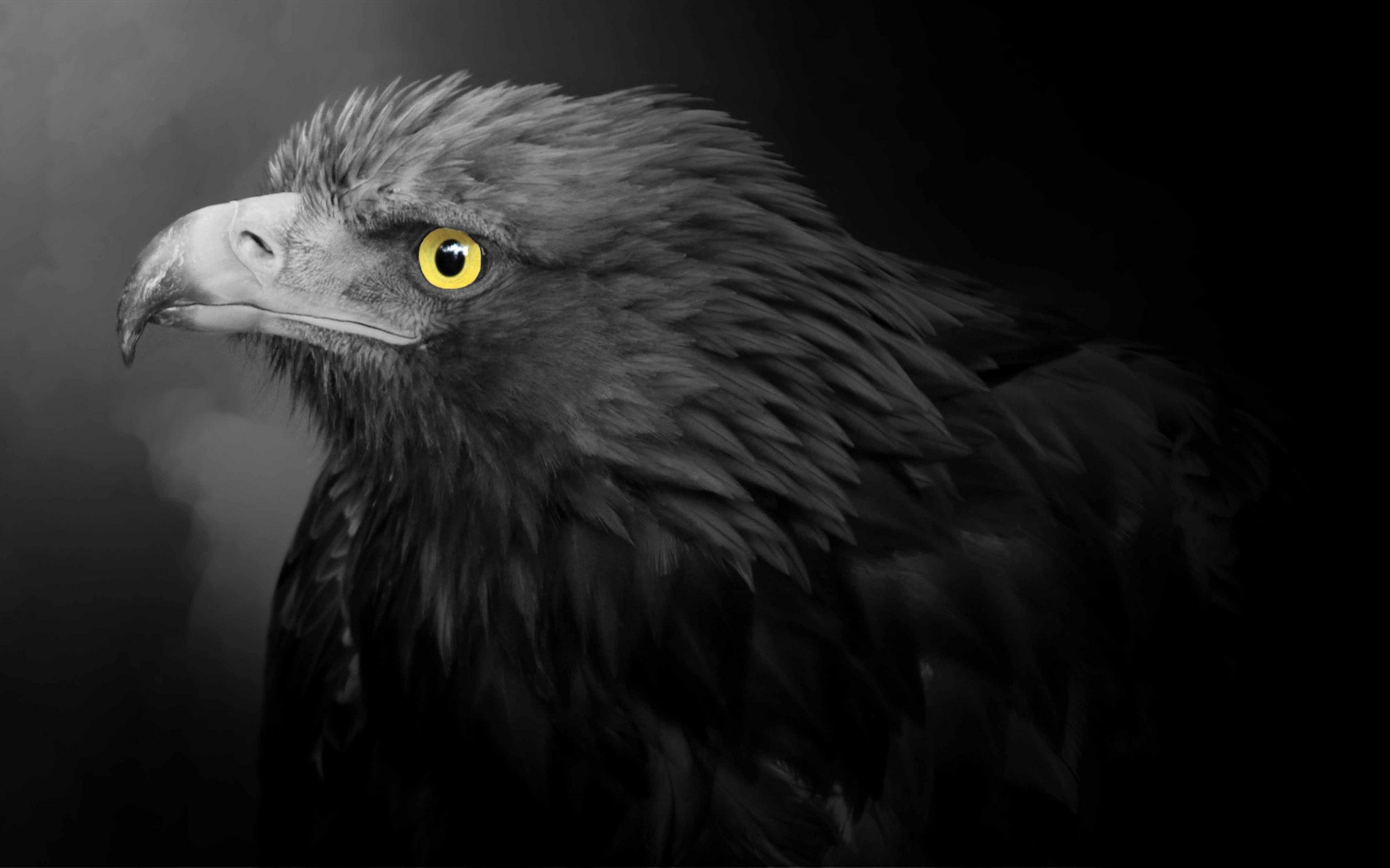 Eagle Black Feathers Yellow Eyes 640x1136 Iphone 5 5s 5c