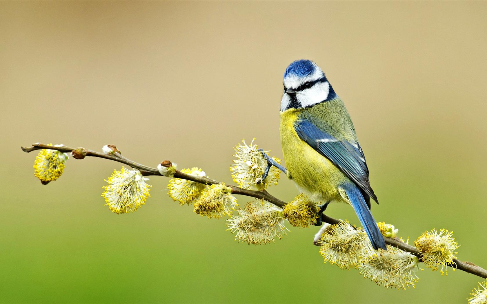 Птицы на ветке  № 1652594 бесплатно