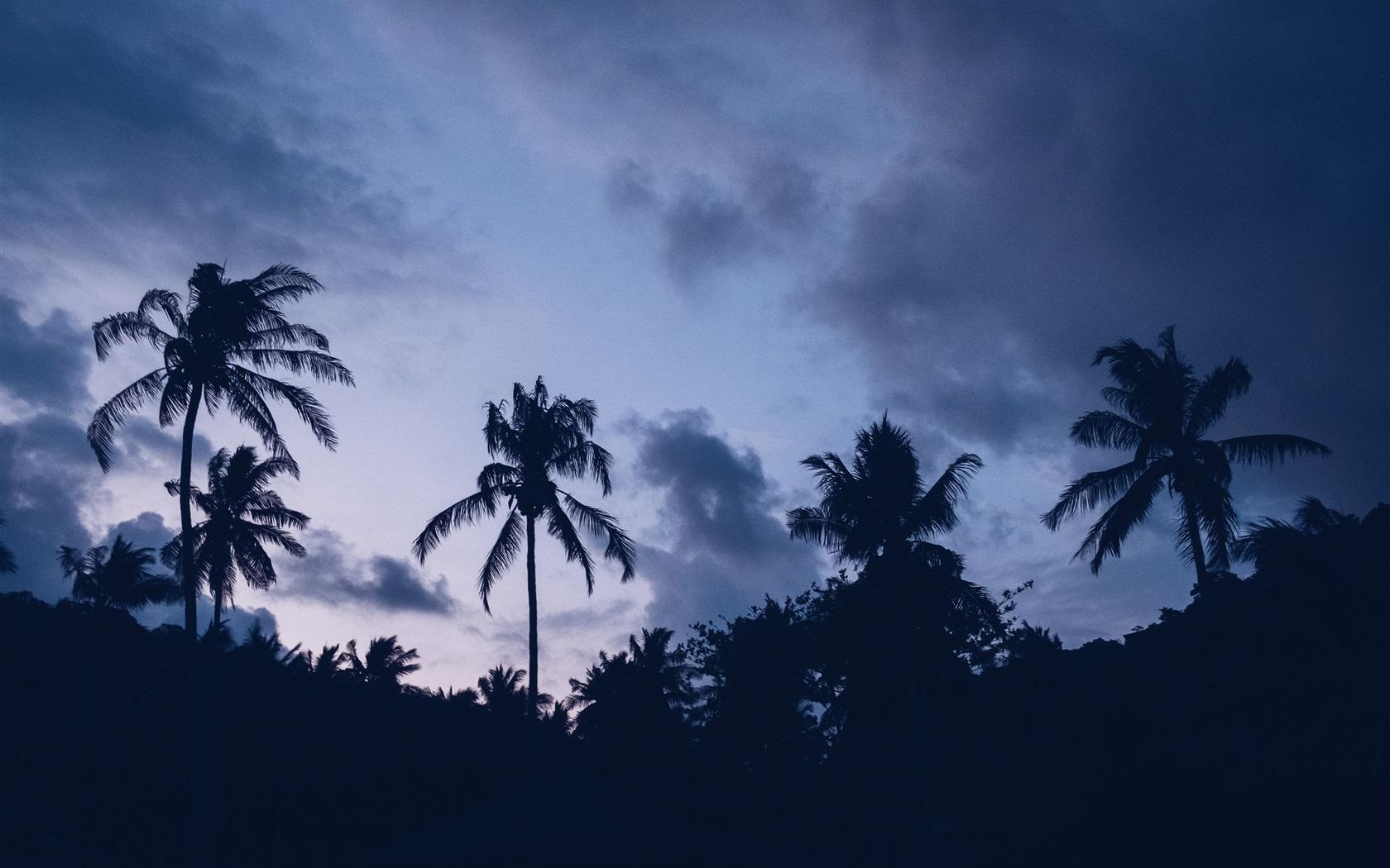 壁紙 ヤシの木 夕暮れ シルエット 3840x2160 Uhd 4k 無料のデスクトップの背景 画像