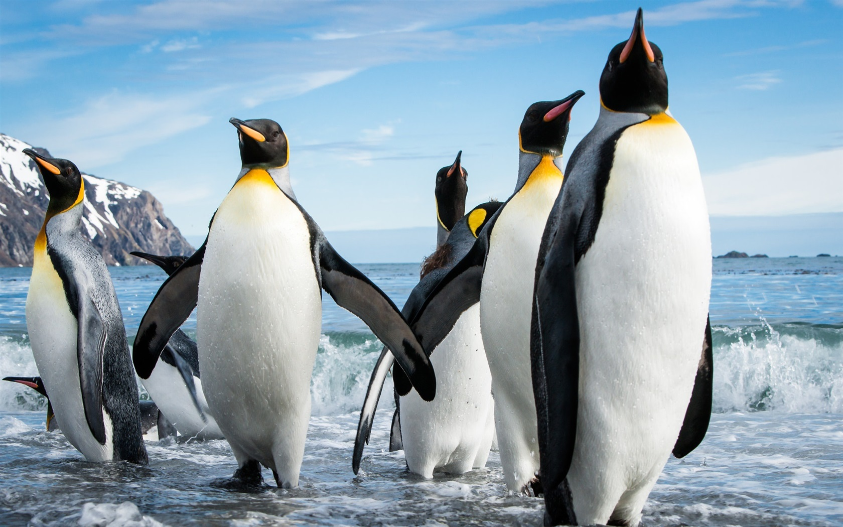 Wallpaper Some Penguins Sea Waves 1920x1200 Hd Picture