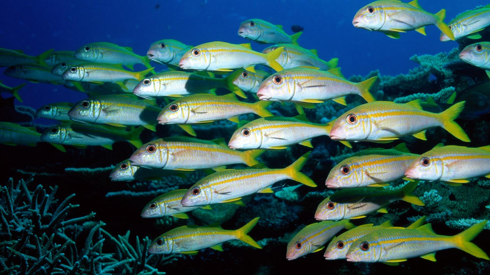 wallpaper groups of fish underwater world 1920x1200 hd