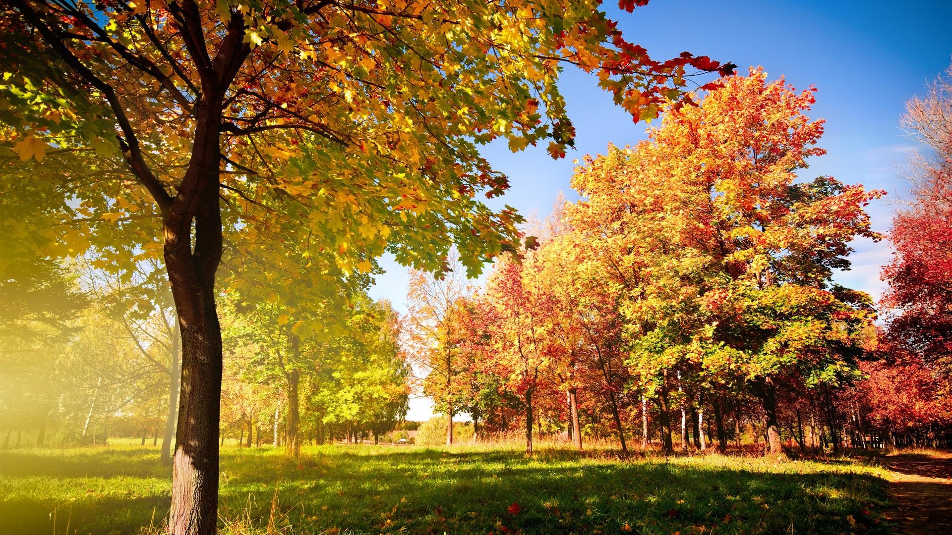 壁紙 秋の木々や葉 2560x1600 Hd 無料のデスクトップの背景 画像