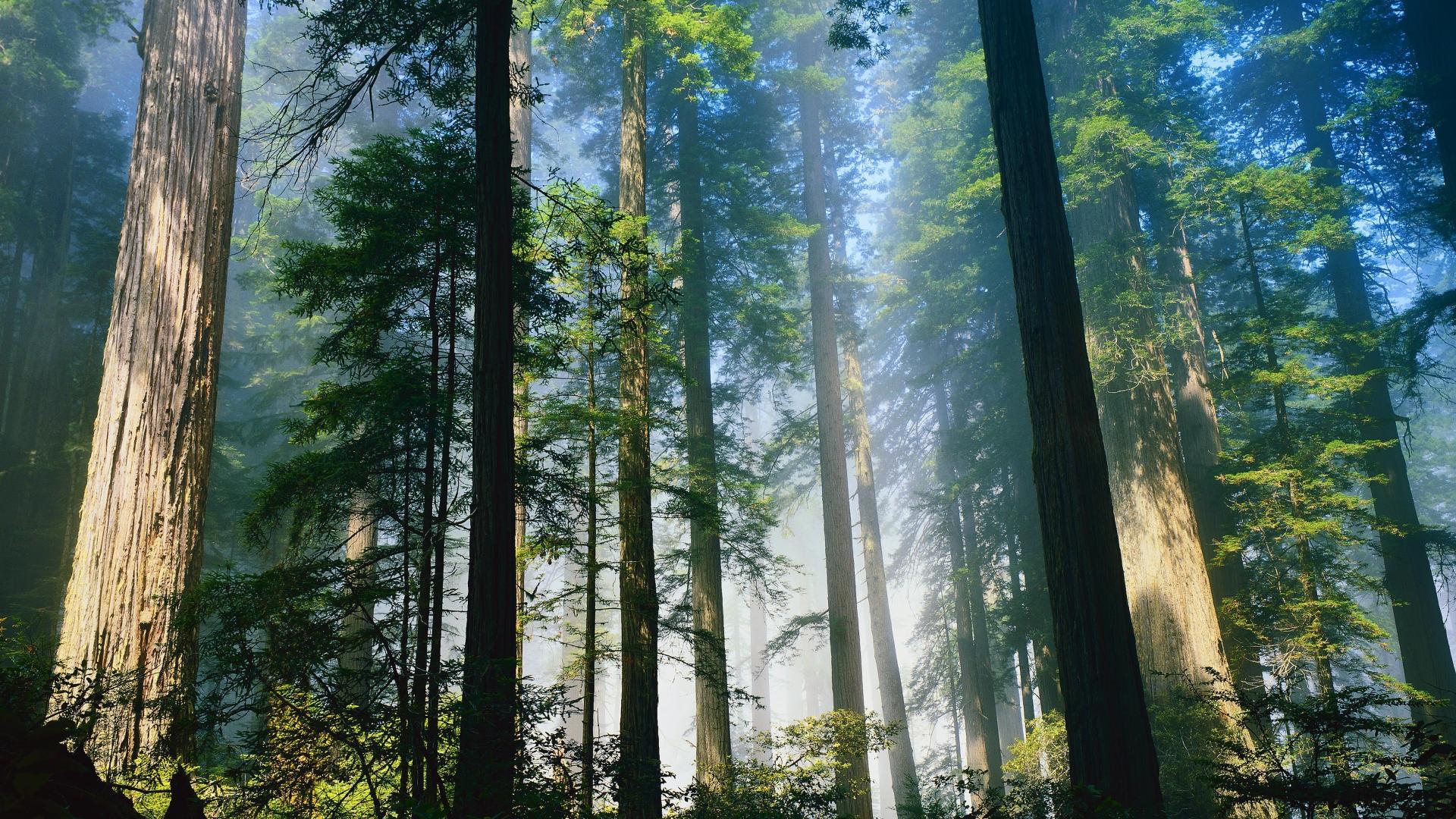 壁紙 新鮮な森林 1920x1080 Full Hd 2k 無料のデスクトップの背景 画像