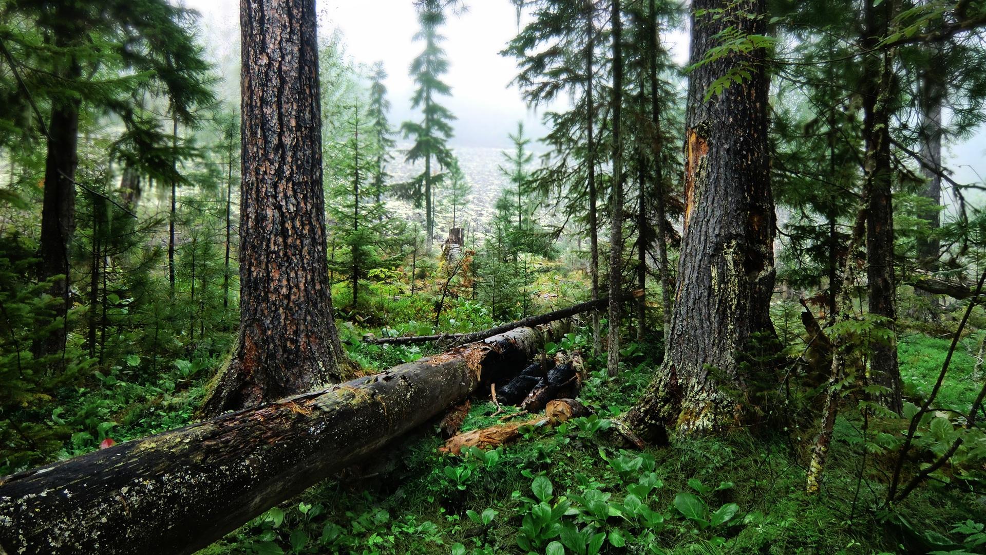 Herbe nature verte et des arbres fonds d écran 1920x1080