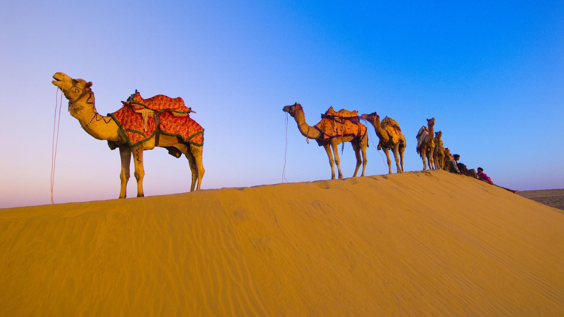 природа животные пустыня  № 3146261 бесплатно