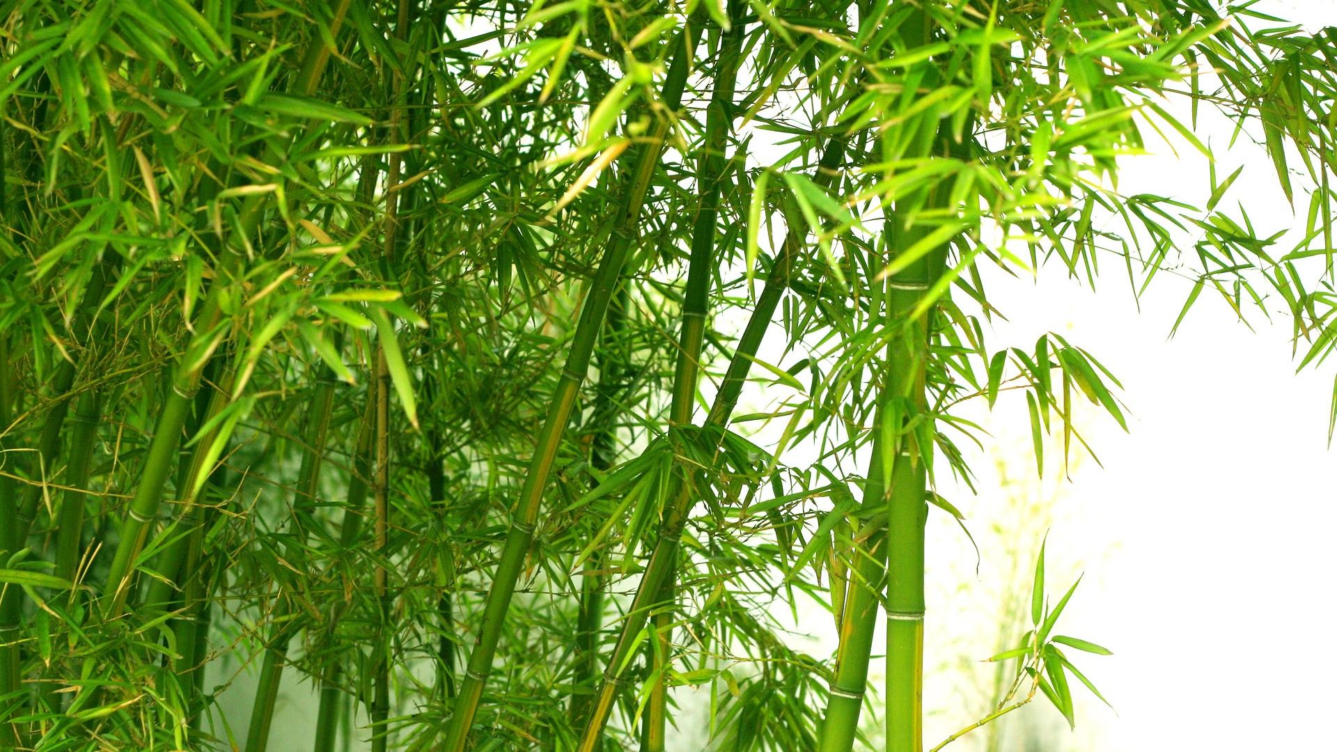 竹の画像 p1_20