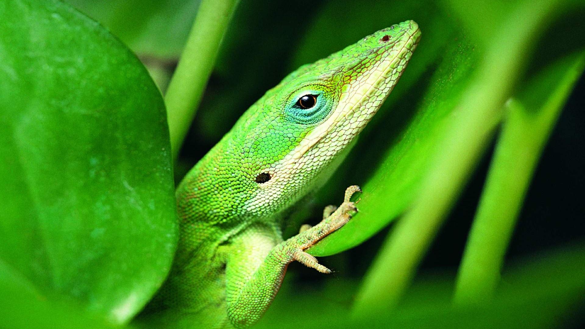 зеленая ящерица ствол без смс
