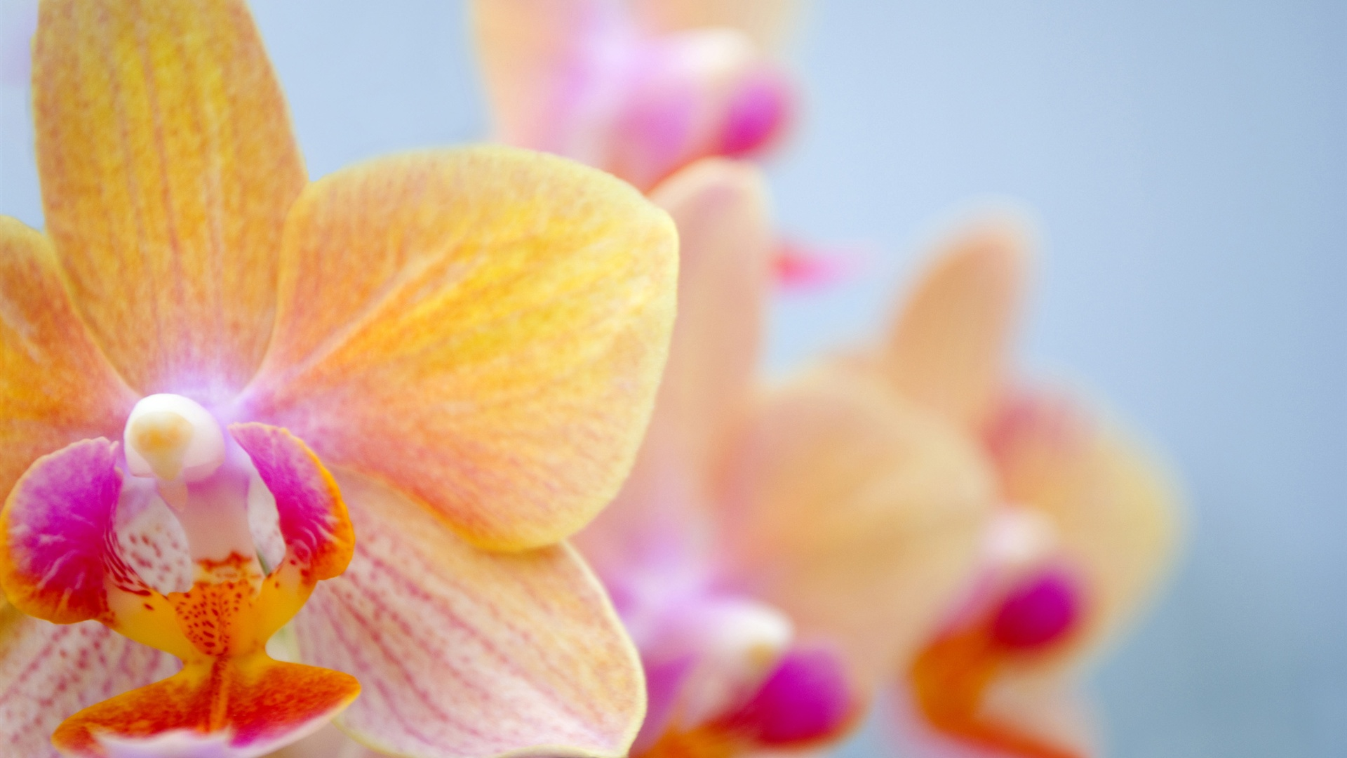 1080 x 1920 orchid wallpaper: Orange Schmetterling Orchidee 2560x1600 HD