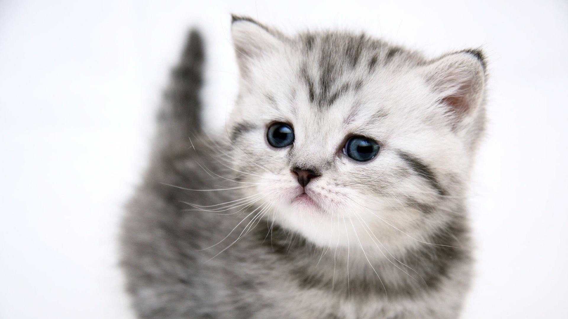 猫 壁紙 1920x1080 壁紙 ダウンロード かわいい 子猫 猫
