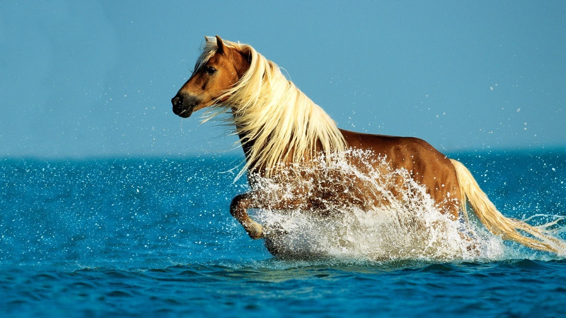 10 Most Popular Wild Animals Wallpapers Free Download Full: 壁紙 水で走る馬 1920x1200 HD 無料のデスクトップの背景, 画像