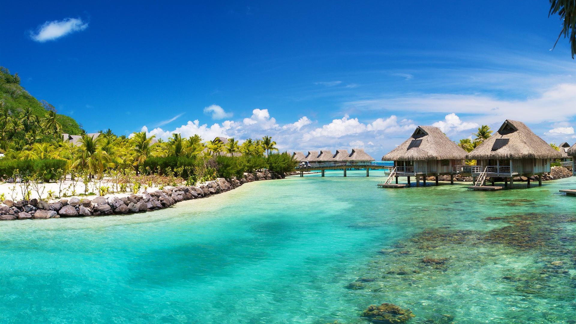 壁紙 熱帯の海 海 ヤシの家 2560x1600 Hd 無料のデスクトップの背景 画像