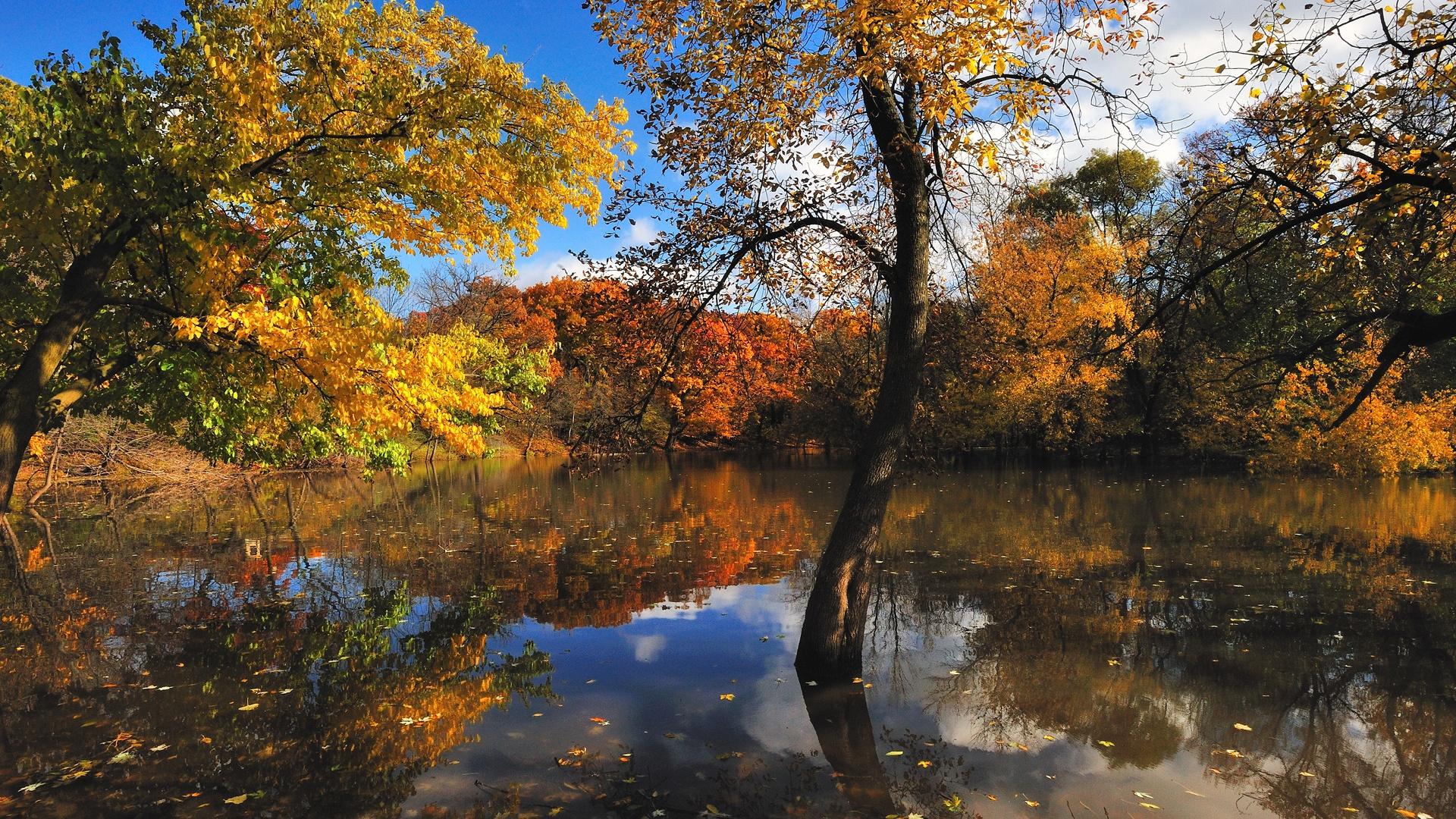 fonds d 39 cran t l charger 1920x1080 nature automne arbres lac full hd fond hd. Black Bedroom Furniture Sets. Home Design Ideas