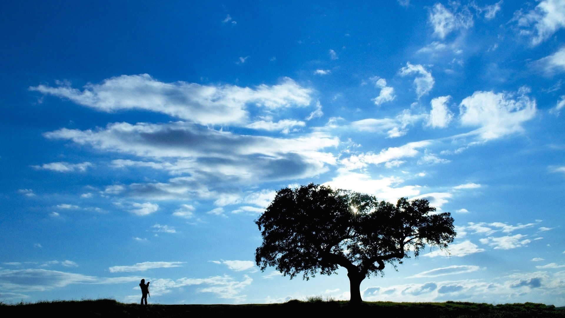 Tree silhouette under the blue sky wallpaper - 1920x1080