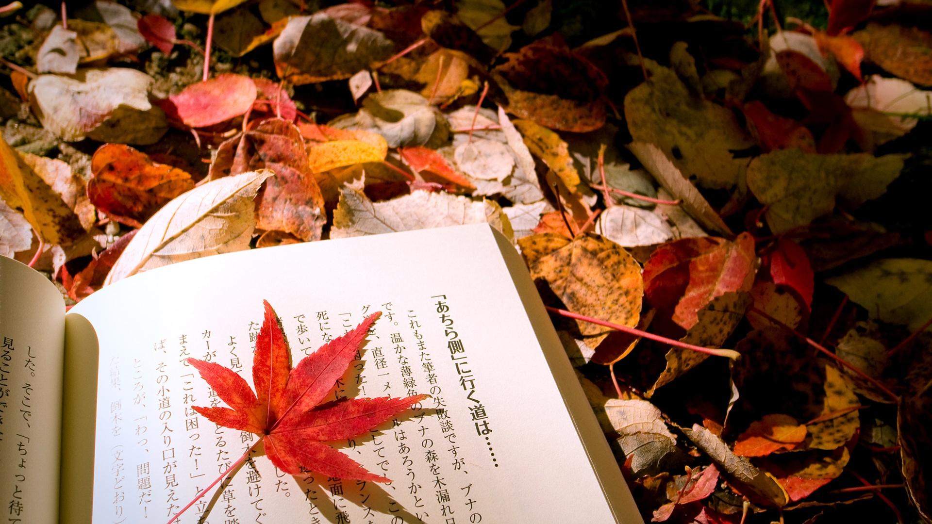 Impremedia Net: Autumn Wallpaper Hd