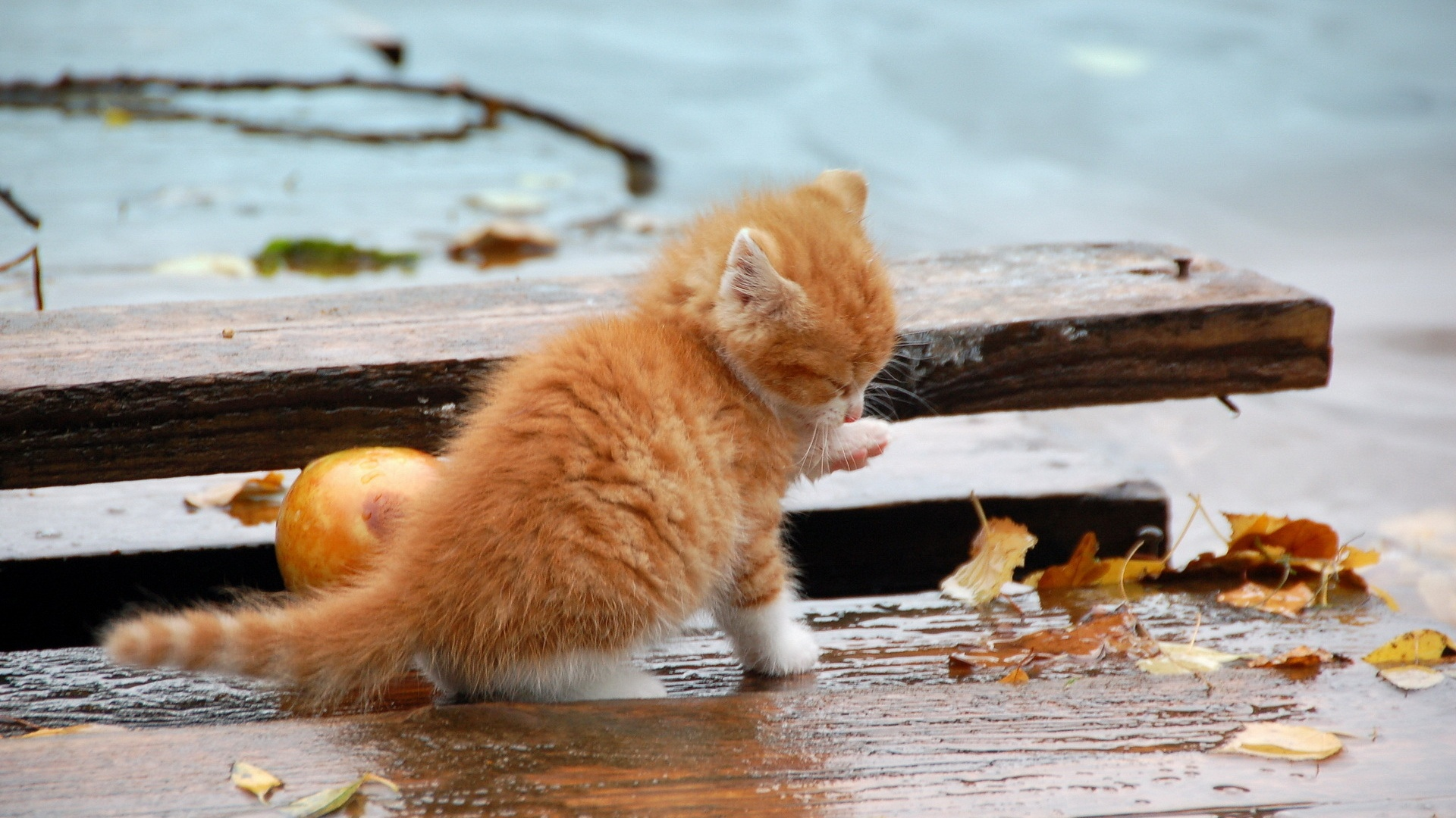 природа животные кот осень загрузить