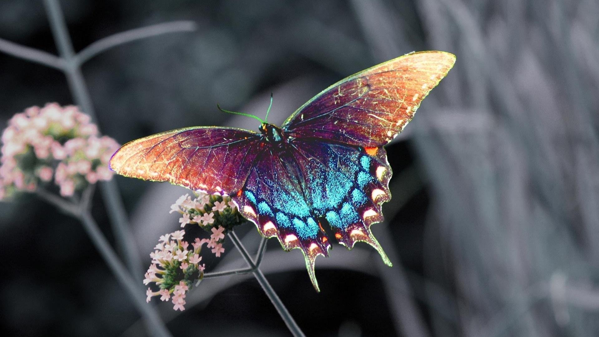 Wallpaper Beautiful Colorful Butterfly 1920x1080 Full HD