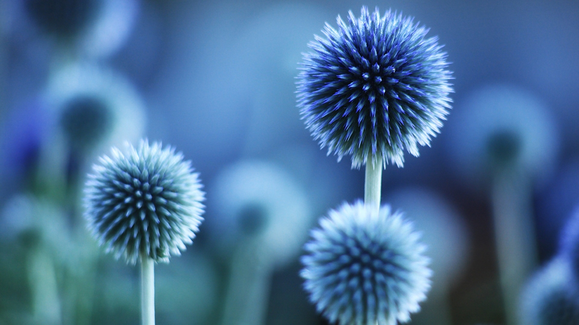Flower plant blue mood wallpaper - 1920x1080