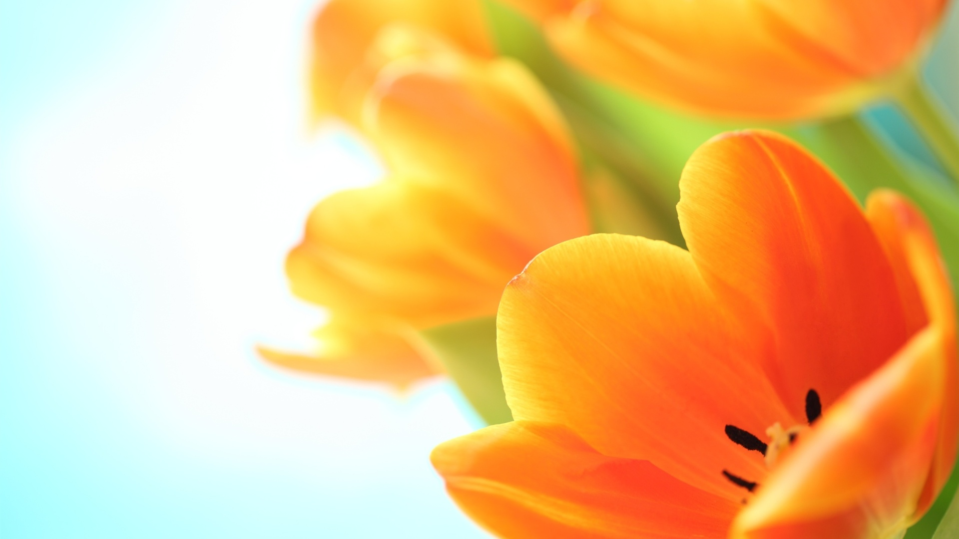 flowers spring wallpaper 1920x1080 - photo #22