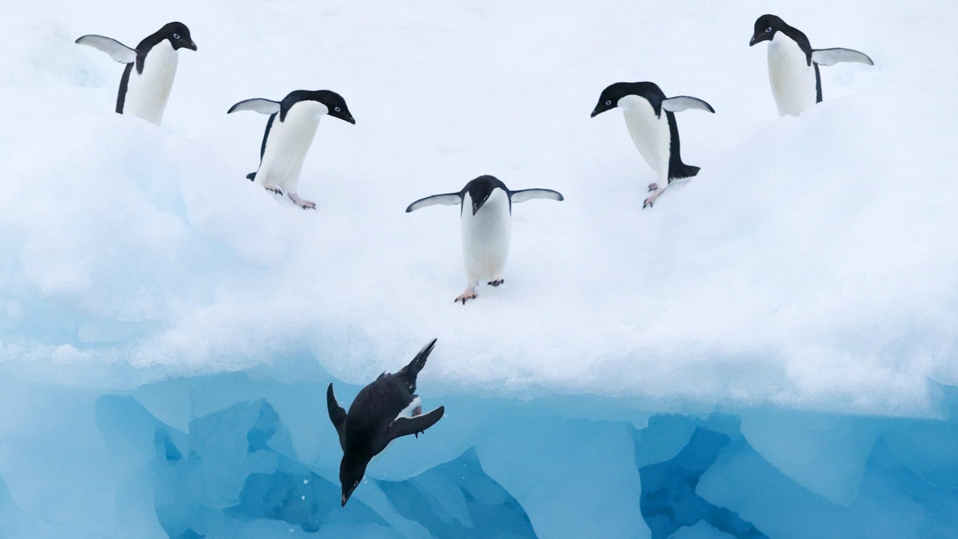 壁紙 ペンギンの氷雪水 1920x1080 Full Hd 2k 無料のデスクトップの