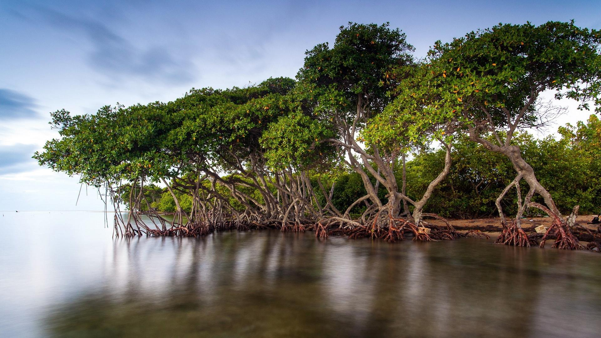 壁纸 湖边风景红树林 1920x1200 Hd 高清壁纸 图片 照片