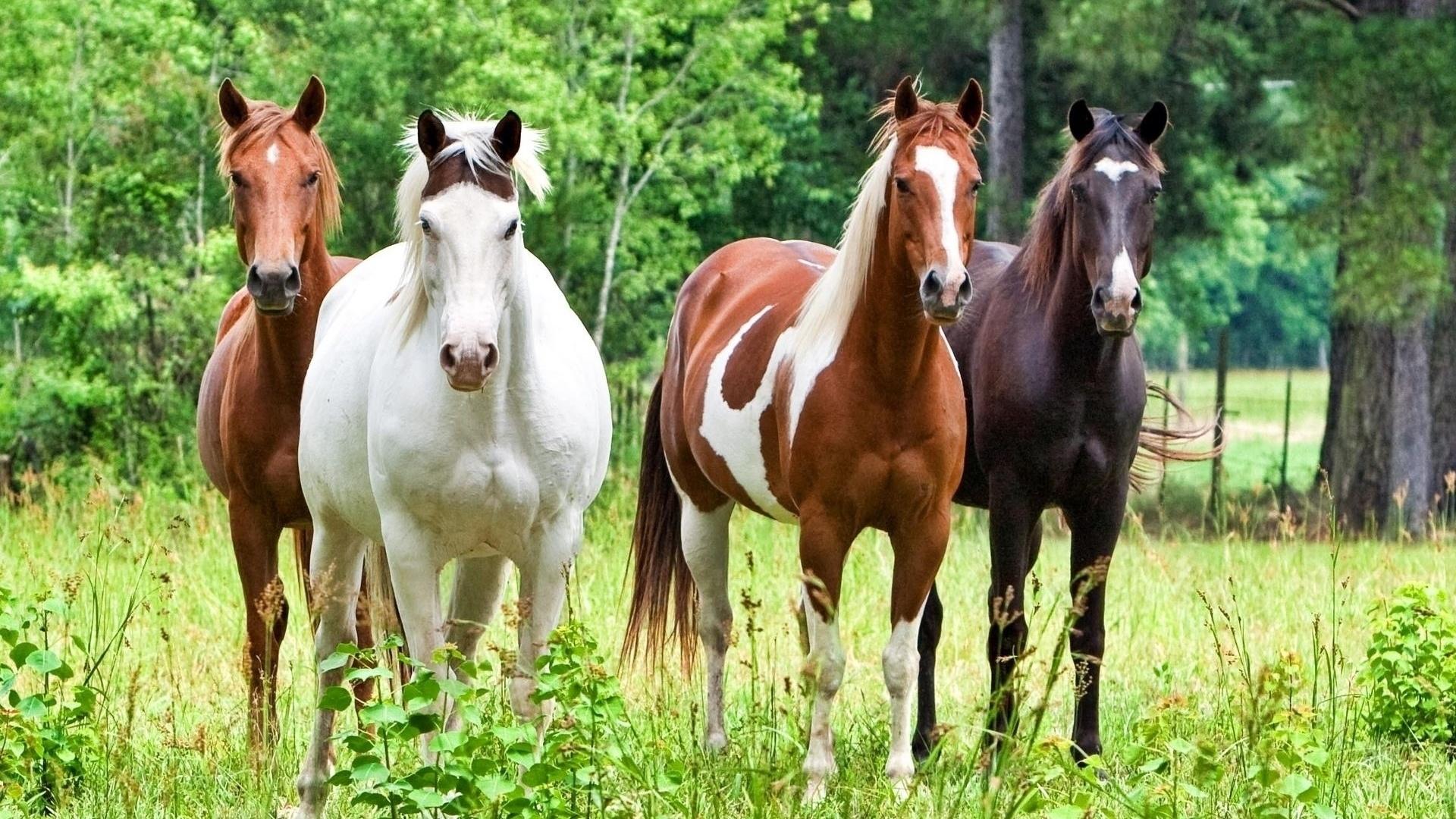 cheval wallpaper hd 1 - photo #12