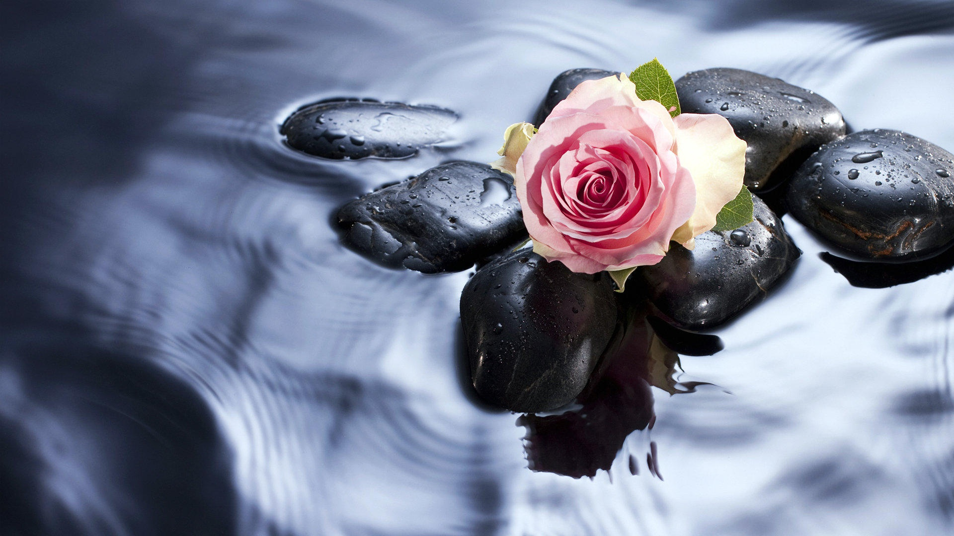 Roses in water wallpaper - 1920x1080